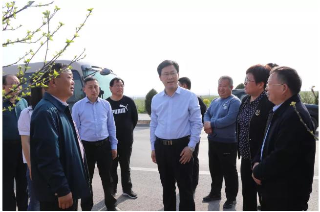 盐湖区委副书记调研盐湖区春季造林绿化工程